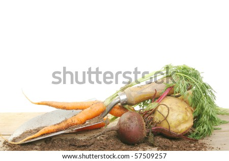 Freshly harvested root vegetables with a trowel and soil