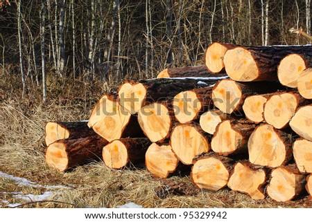 Freshly harvested Scots Pine (Pinus sylvestris) trunks on a stack.