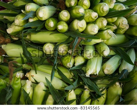 Freshly harvested sweet corn on display at the farmer's market