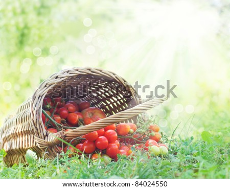 stock-photo-freshly-harvested-tomatoes-large-basket-full-of-cherry-tomatoes-lying-in-the-summer-grass-84024550.jpg