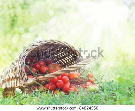 stock-photo-freshly-harvested-tomatoes-large-basket-full-of-cherry-tomatoes-lying-in-the-summer-grass-84024550.jpg