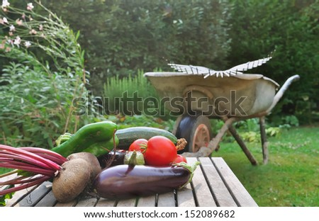 Freshly harvested vegetables placed on a plank in front of a wheelbarrow in the garden