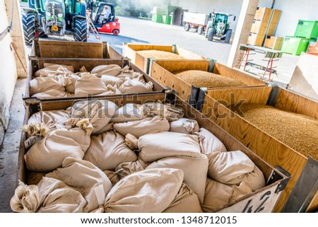 freshly harvested wheat in warehouse hall, quality control