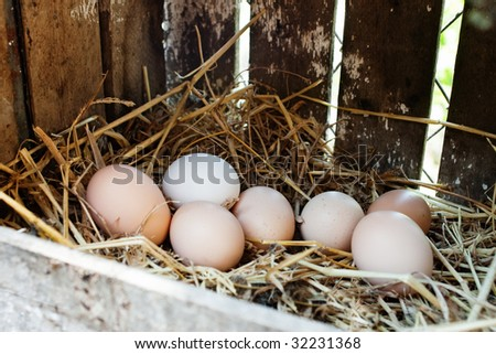 Freshly laid eggs in hay nest box with selective focus
