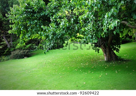 Freshly Mown Lawn and Tree in a Peaceful Leafy Garden