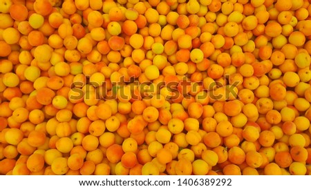 freshly picked apricot market place