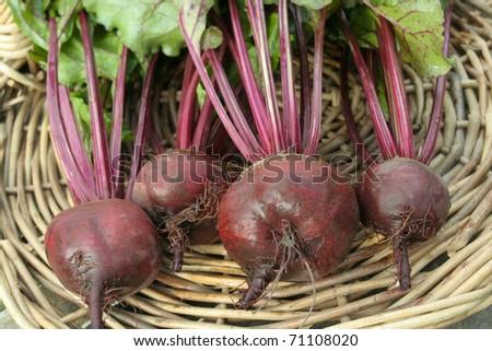 Freshly picked beetroot vegetables