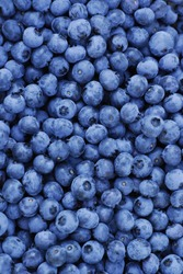 Freshly picked blueberries