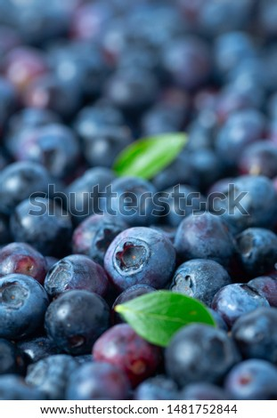 freshly picked blueberries as background