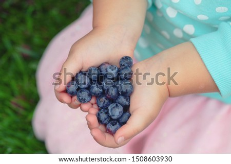 freshly picked blueberries in a child hands