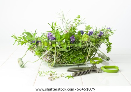 Freshly picked herbs in a wire basket with handles on a white background