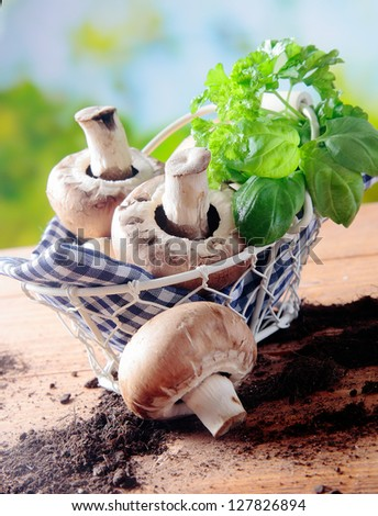 Freshly picked mushrooms and basil in a rustic wire basket lined with a blue and white checked napkin on a wooden table in the sunshine