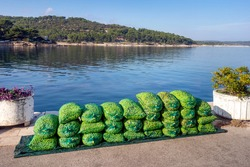 Freshly picked olives in green bags near the sea  for production of extra virgin olive oil, island Brac in Croatia