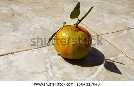 freshly picked oranges look fresh and sweet