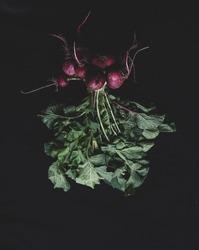 freshly picked radishes in dark mode