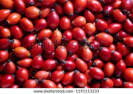 Freshly picked rose hips. Full frame shot of rose hip or rosehip, commonly known as the dog rose (Rosa canina). Stock photo ©