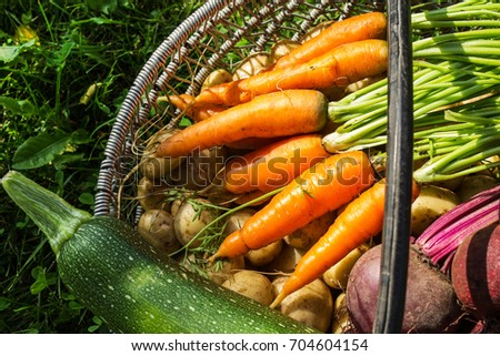 freshly picked vegetables in a...