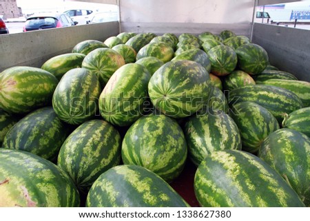 Freshly picked watermelons #1338627380