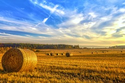 Freshly rolled hay bales in a field in North East Scotland