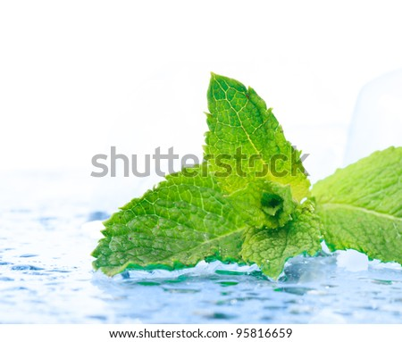 Freshness twig of mint with ice and waterdrops
