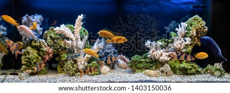 Freshwater aquarium in pseudo-sea style. Aqua scape and aqua design.