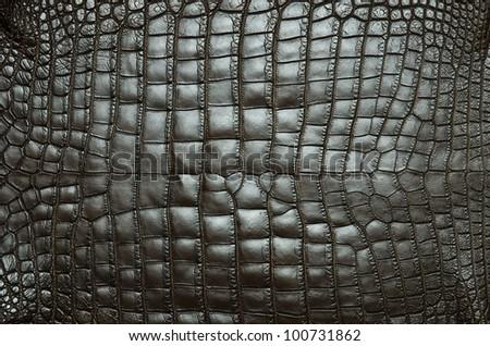 Freshwater crocodile belly skin texture background.