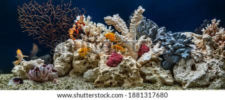 Freshwater fish tank designed in pseudo-sea style. Aqua scape and aqua design. Stok fotoğraf ©