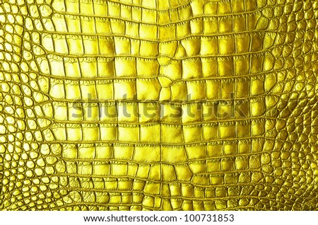 Freshwater Gold crocodile belly skin texture background.