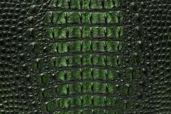 Freshwater green crocodile bone skin texture background.