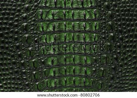 Freshwater green crocodile bone skin texture background.