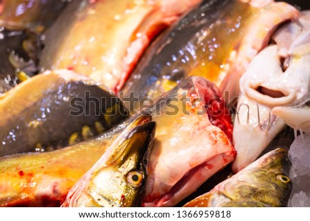 Freshwater pikes on a seafood market #1366959818