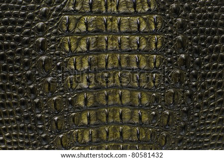 Freshwater yellow crocodile bone skin texture background.