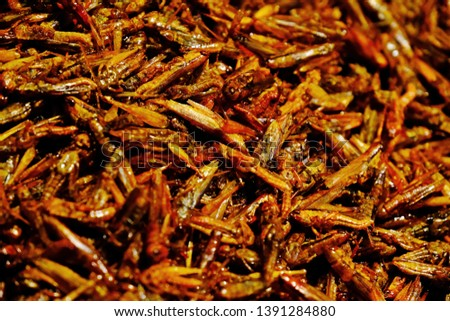 Fried grasshoppers with seasoning sauce. Selective focus. #1391284880