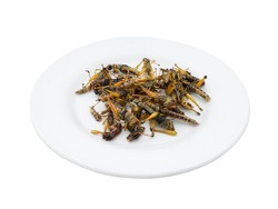 Fried insects - Grasshopper insect after fried on white plate isolated on white background, Select focus, Closeup image.