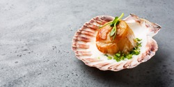 Fried Scallop with butter creamy sauce served in cockleshell on concrete background copy space