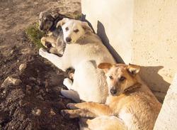 Friendly dogs in Yessentuki is a spa city in Stavropol Krai