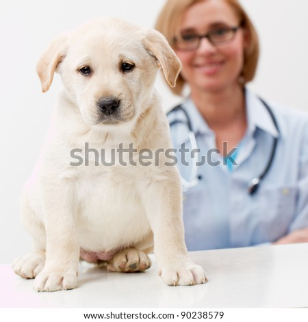 Friendly female veterinary and beautiful labrador puppy