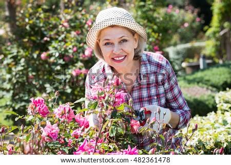 Friendly positive senior woman trimming a rose-bush in the garden #482361478