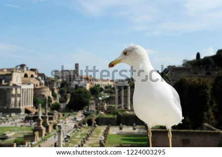 Friendly seagull against the backdrop of the Roman Forum in Rome, Italy. Roman Forum is one of the main travel attractions of Rome. Historical architecture and landscape of central Rome.