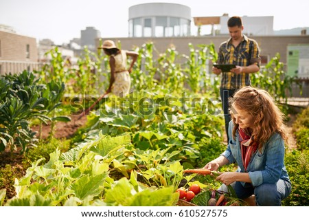 Shutterstock Friendly team harvesting fresh vegetables from the rooftop greenhouse garden and planning harvest season on a digital tablet