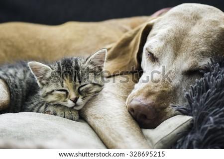Friends - Shutterstock ID 328695215