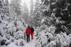 Friends hiking snowshoeing in winter forest among trees covered with fresh snow. Winter sports. Active women in mountains. Seymour Provincial Park. North Vancouver. British Columbia. Canada.