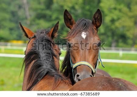 friends horses