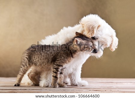 Friends - small dog and cat together #106664600
