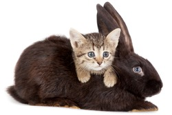Friendship animals and pets. Kitten and Rabbit in studio isolated on white background.