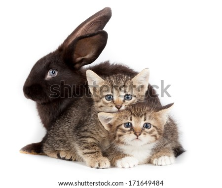 Friendship animals and pets. Kitten and Rabbit in studio isolated on white background. #171649484