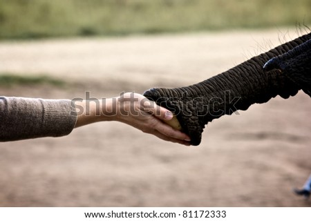 Friendship between animal an man, elephant and lady