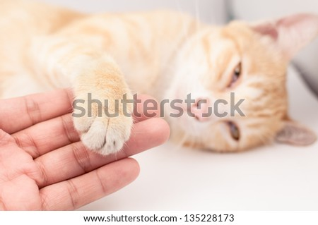 Friendship between man and cat on white background