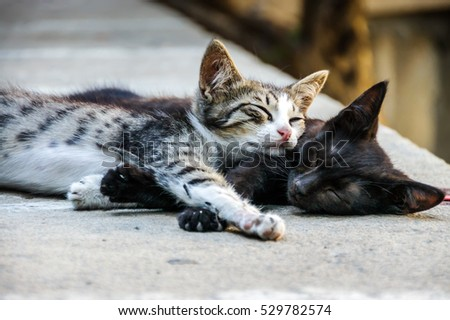 Friendship concept. Team concept. Trust concept. Love concept. Two sweet small friends cats sleeping lazy on street. Best friends cats. Friendship day. Cat isolated. Kitten trust friendship. Best Team