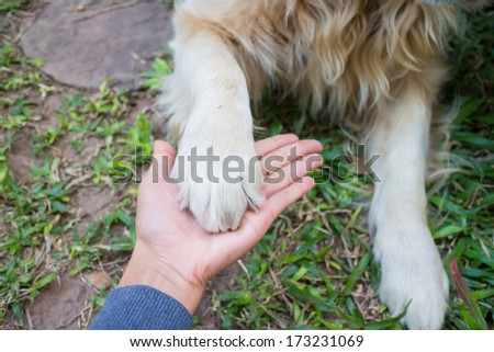Friendship human and dog , hand and paw